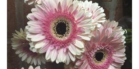 Serie: Nuestra flor del mes
