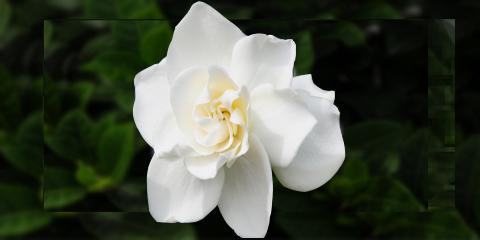 Nuestra planta y Flor del mes