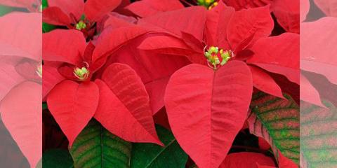 Nuestra planta del mes de Diciembre.