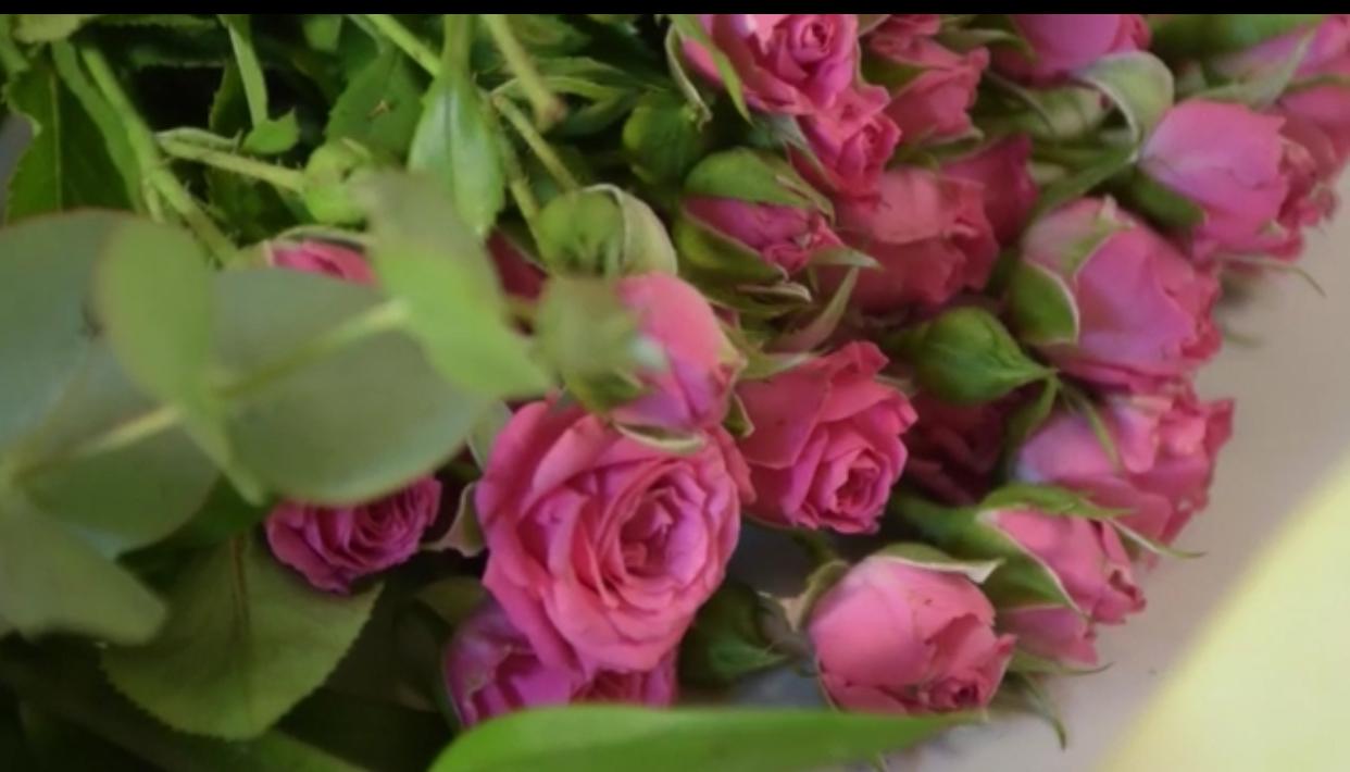 Las plantas y las flores como parte de nuestra vida cotidiana.!