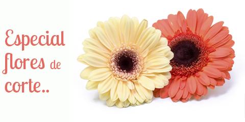 Especial flores de corte..