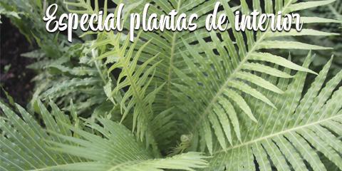 Especial plantas de interior…