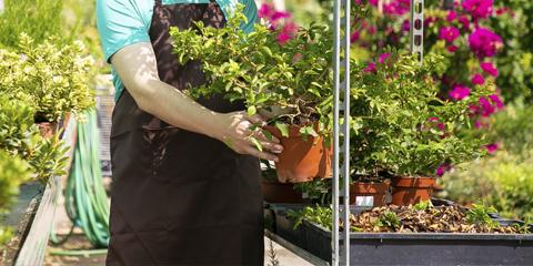 Muy feliz día a los Jardineros, Viveristas, Parquistas y Floricultores!!