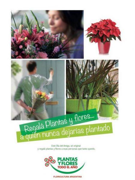 Plantas y Flores en Julio, mes de la Amistad!!